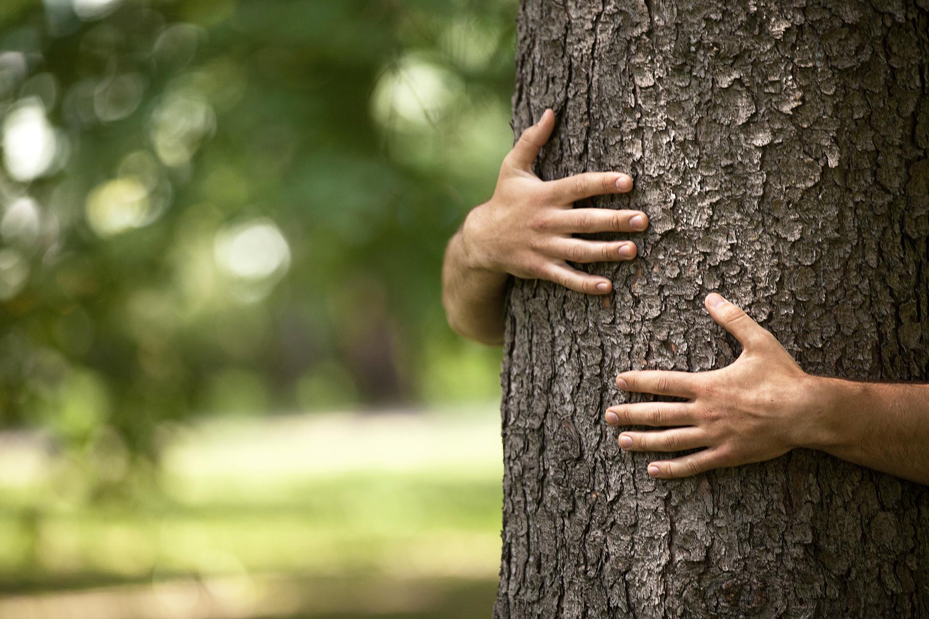Biohiili elvyttää vanhat puut