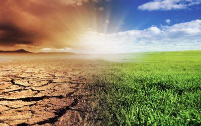 Biohiili on ilmastoteko