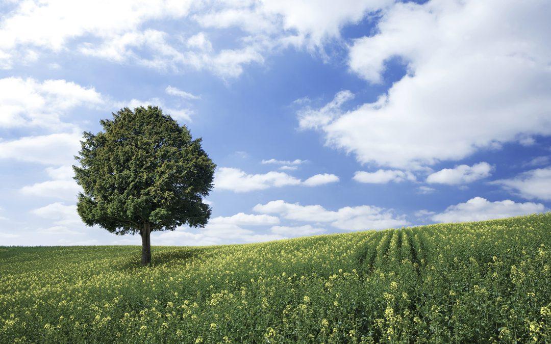 Biohiili ilmastonmuutos