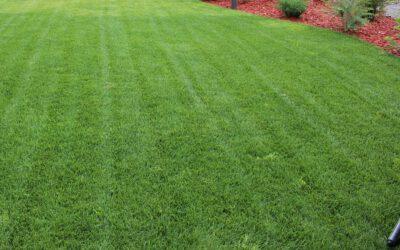 Kevään biohiilivinkki. Paranna (siirto)nurmikkoasi.
